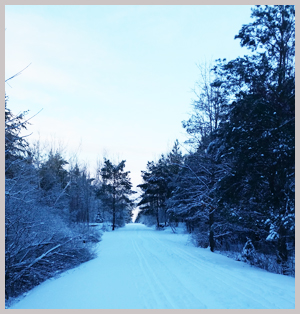 winter_trail